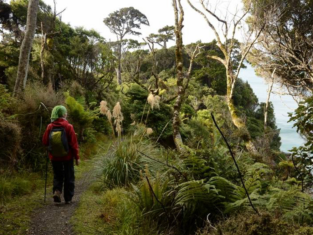 Rakiura Track auf Stewart Island